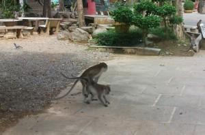 Die Affen lassen alle Hemmungen fallen